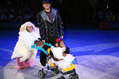 Тигран Акопят и его дрессированные шимпанзе