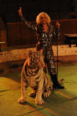 Ольга денисова, аттракцион Белые тигры