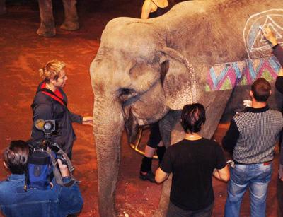 Слониха Индра
