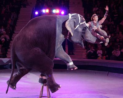 Андрей Дементьев-Корнилов на хоботе у слона