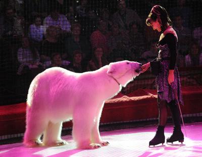 «Белые медведи» п/р Юлии Денисенко